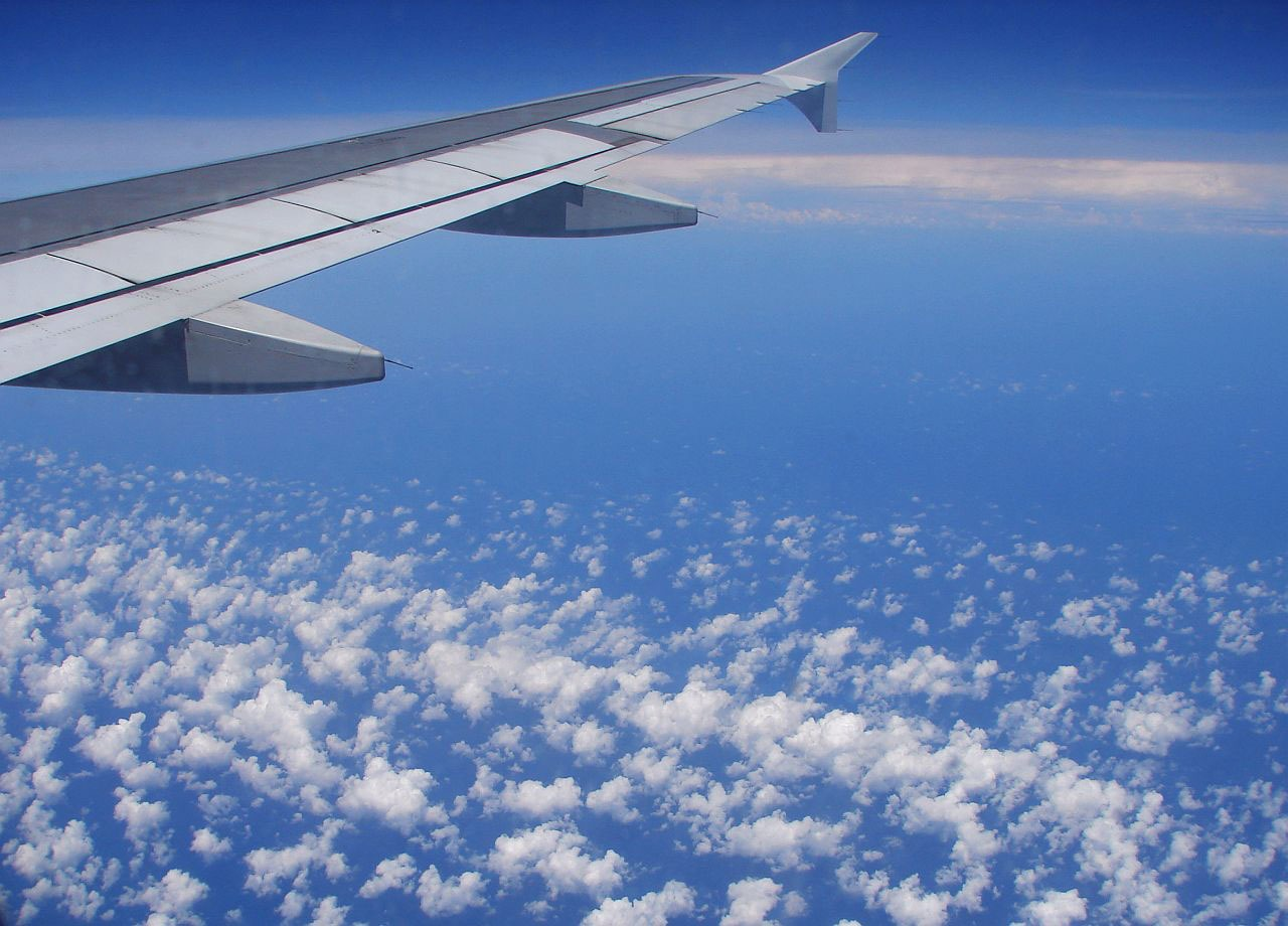 Bird Strikes on Aircraft - are they dangerous and can flight delay compensation be claimed? image