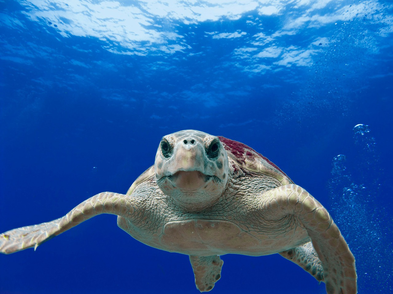 easyJet at loggerheads with endangered turtles image