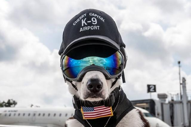 Dog in Sunglasses used by Airport to Scare Away Birds | FairPlane UK image